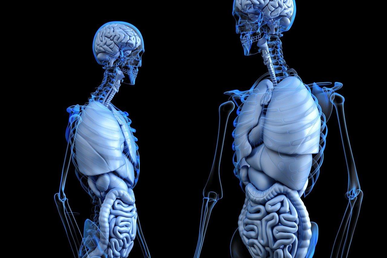 Studio medico Gallotti - colon e organi interni